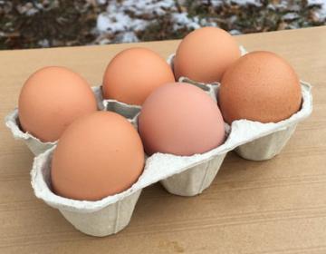 Œufs de poules élevées en plein air (vendus par 6)