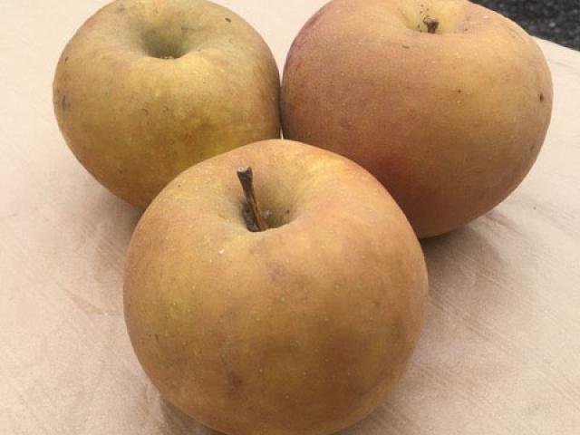 Pommes variété Boskop